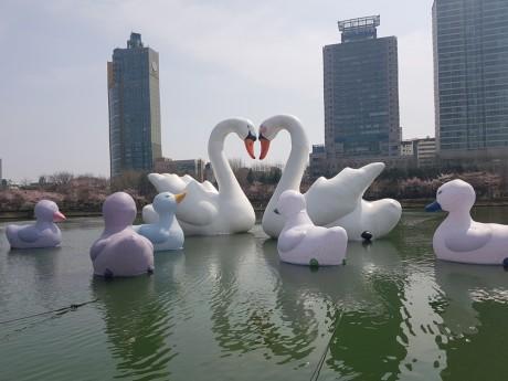 sweet swans Florentijin Hofman 201704-01