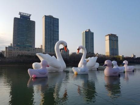sweet swans Florentijin Hofman 201704-04